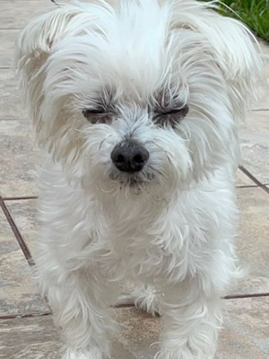 March Rescue: Kiki