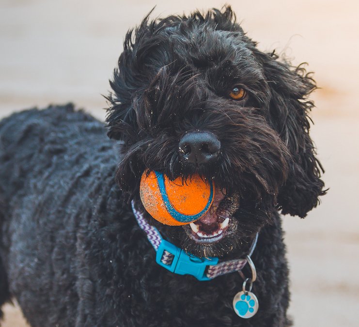 Take Your Dog – Work or Play!
